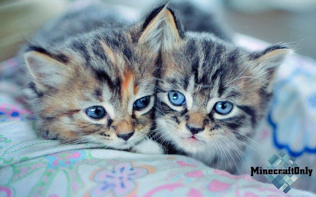 Плащи с котиками!