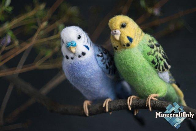 Плащи с попугаями!